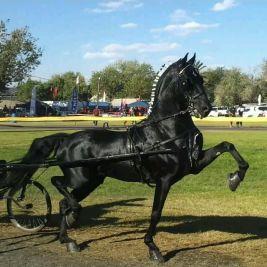 hackneyhorse